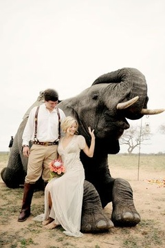 Elephant Wedding Safari