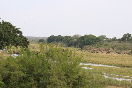 Wild Bush of Marloth Park