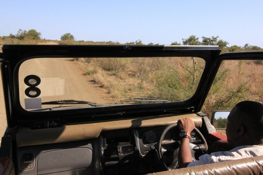 Open Vehicle Game Drives With Qualified Guide