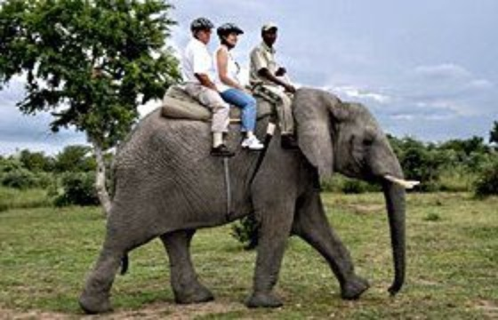 Elephant Back Safaris With Qualified Guide