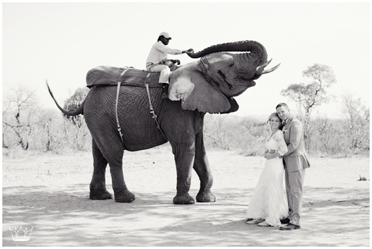 Elephant Weddings