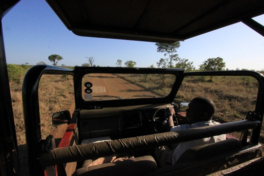 Guided Kruger National Park Game Tours