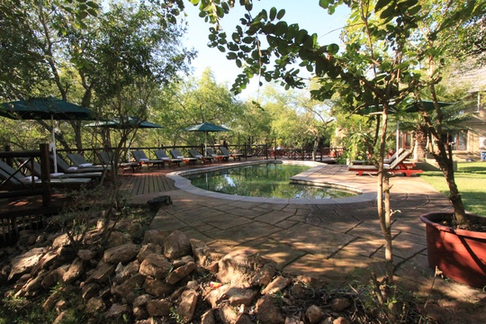 Grand Kruger Loge Swimming Pool Overlooking The African Bush Veld